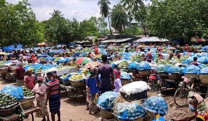 চাঁপাইনবাবগঞ্জে আম্রপালি আমের দাপটে ফজলি আমের দরে পতন