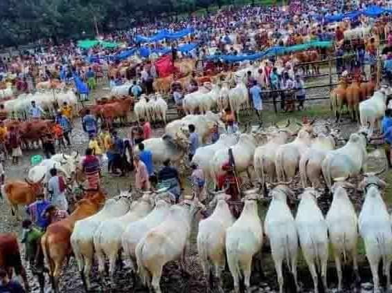 চাঁপাইনবাবগঞ্জের খামারিরা দুশ্চিন্তায় কোরবানির পশু বিক্রি নিয়ে