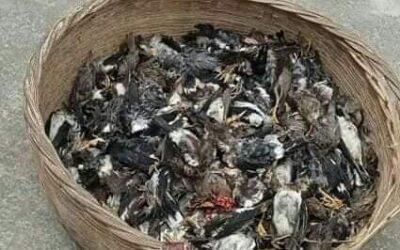নড়াইলে বিপুল পরিমাণ দেশী প্রজাতির মৃত পাখি উদ্ধার করেছে পুলিশ
