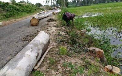 সলঙ্গায় অবৈধভাবে সরকারি রাস্তার গাছ কাটার অভিযোগ